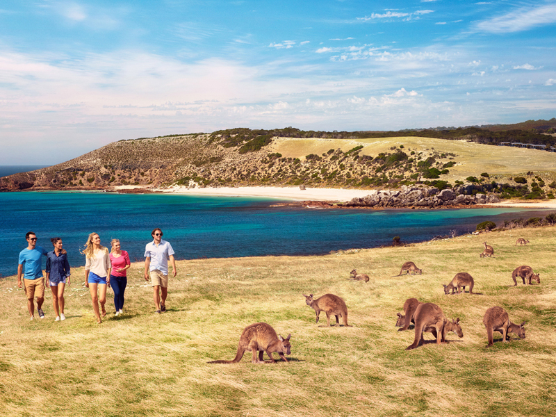Family walking along shore by wallabies in Australia